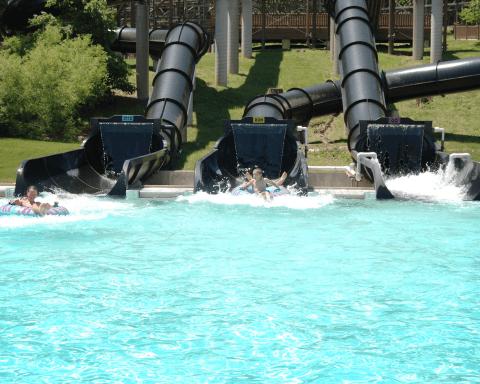 Otorongo | Holiday World & Splashin' Safari