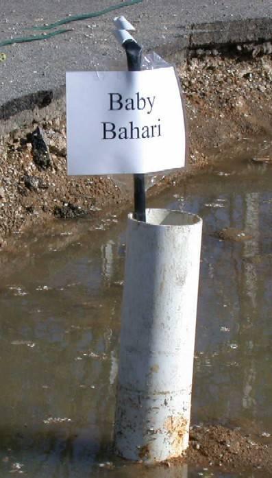 """""""Baby Bahari"""""""