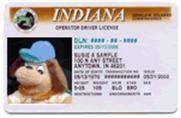 Holidog's license