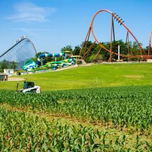 Corn Maze Cutting