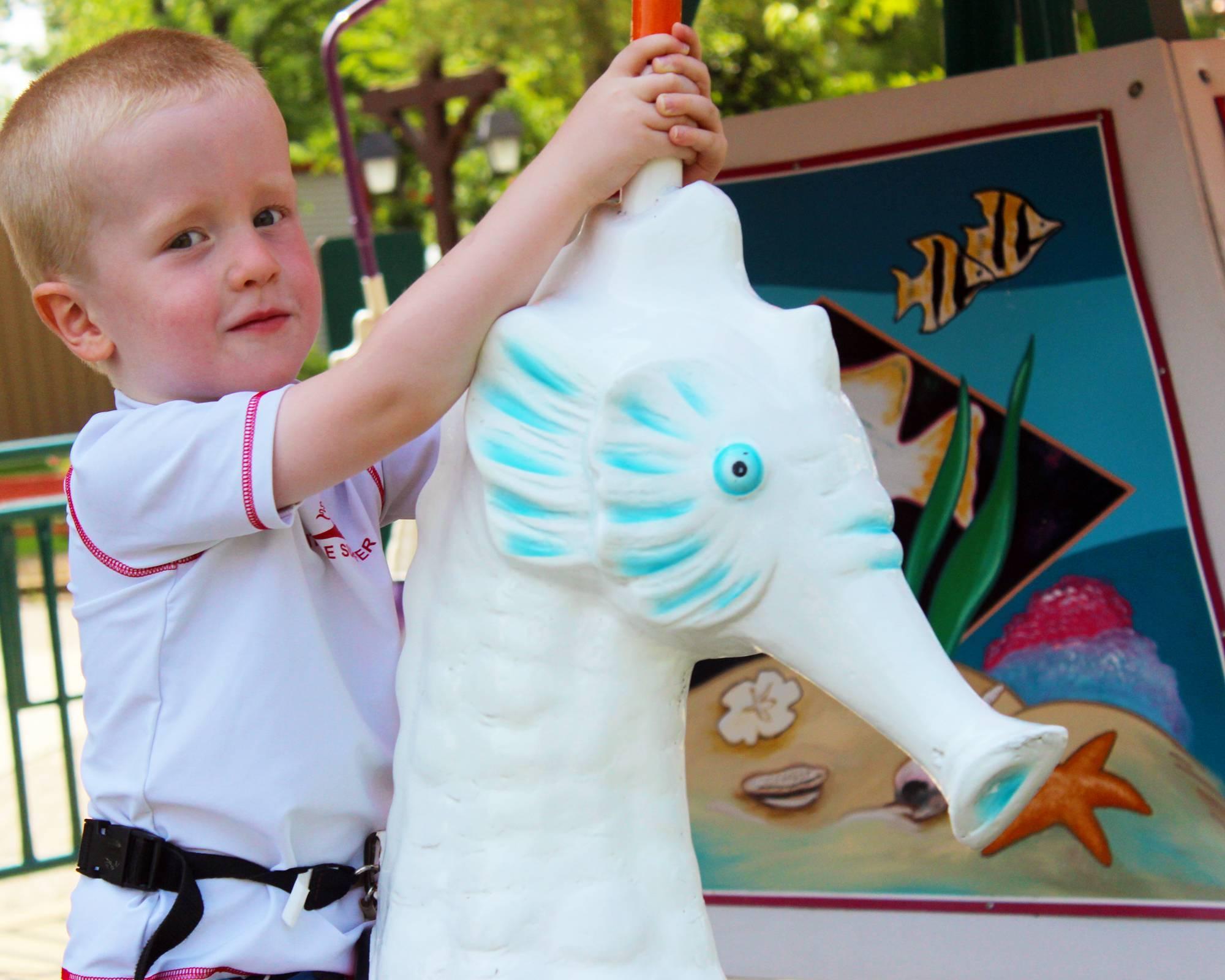 Dasher's Seahorses   Holiday World & Splashin' Safari