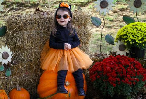 Kitty Claws Costume| Holiday World & Splashin' Safari