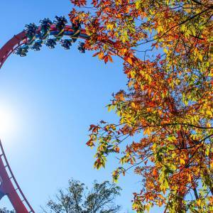 Sun Illuminating Thunderbird's Vertical Loop and Fall Trees